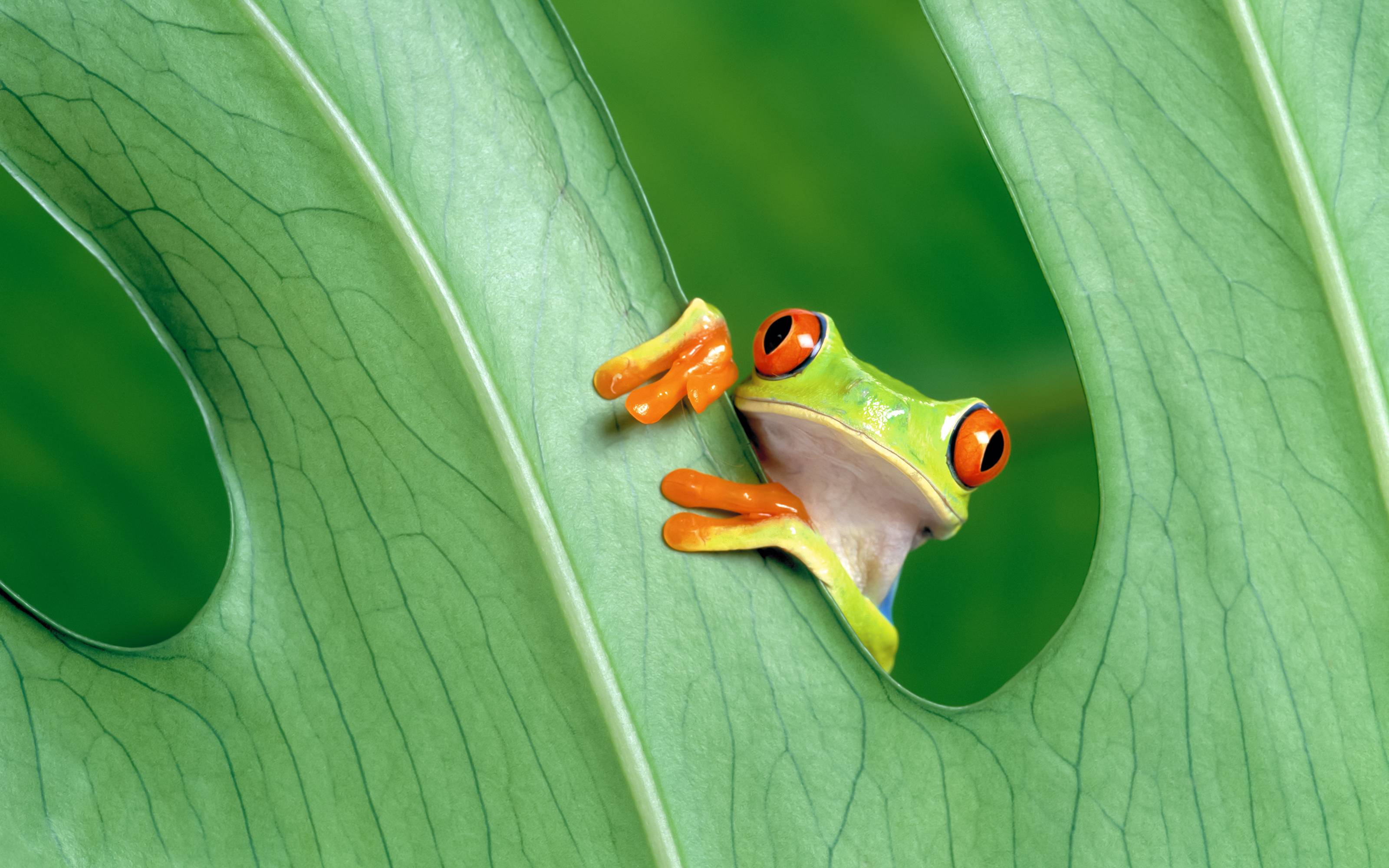 6841193-frogs