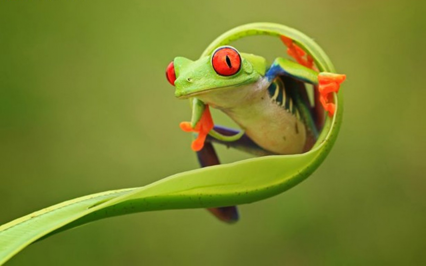 Frog-HD-Wallpapers6