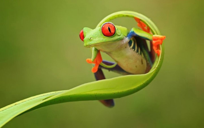 Frog-HD-Wallpapers6