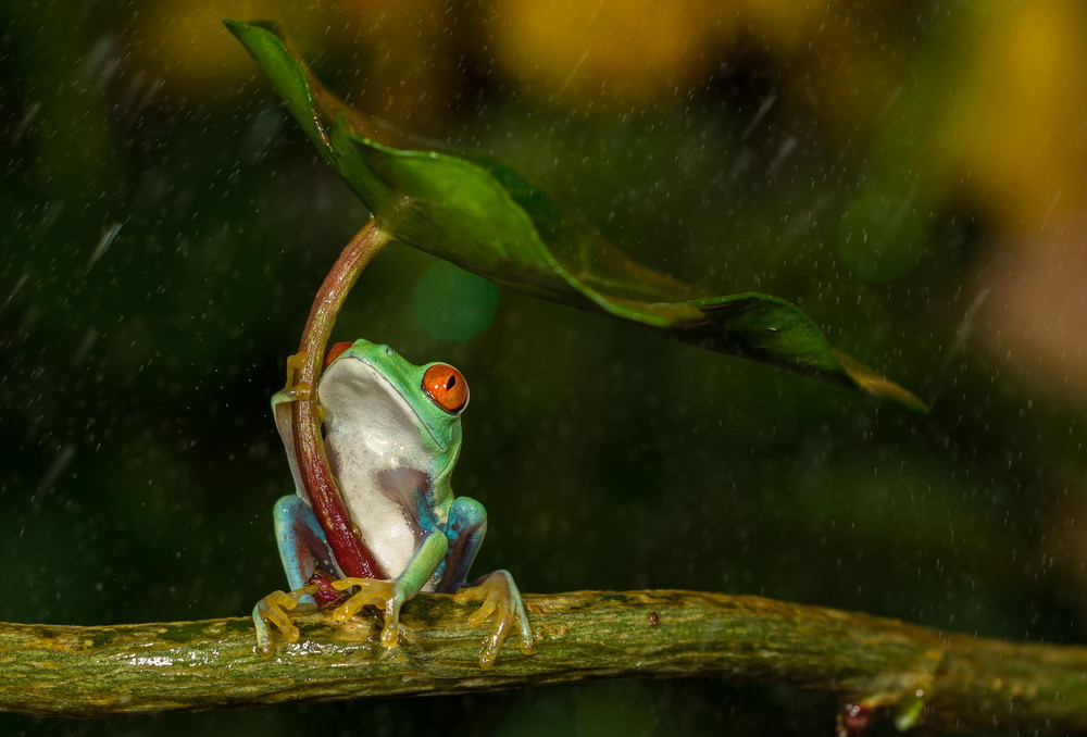 frog-photos-nature-photography-1