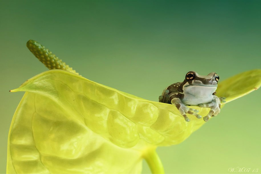frogs-macro-photography-wil-mijer-5