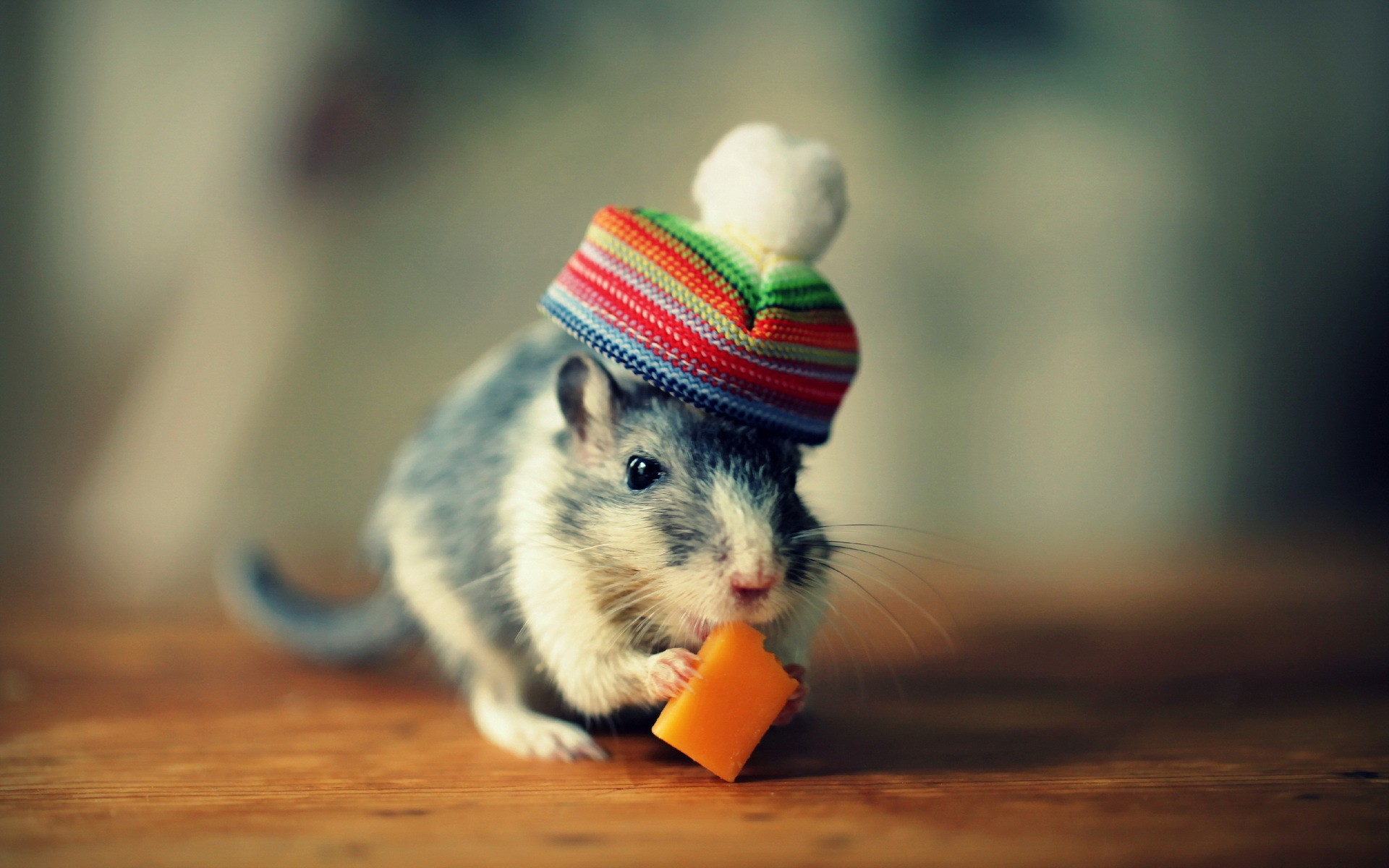 Eating-mouse-with-hat