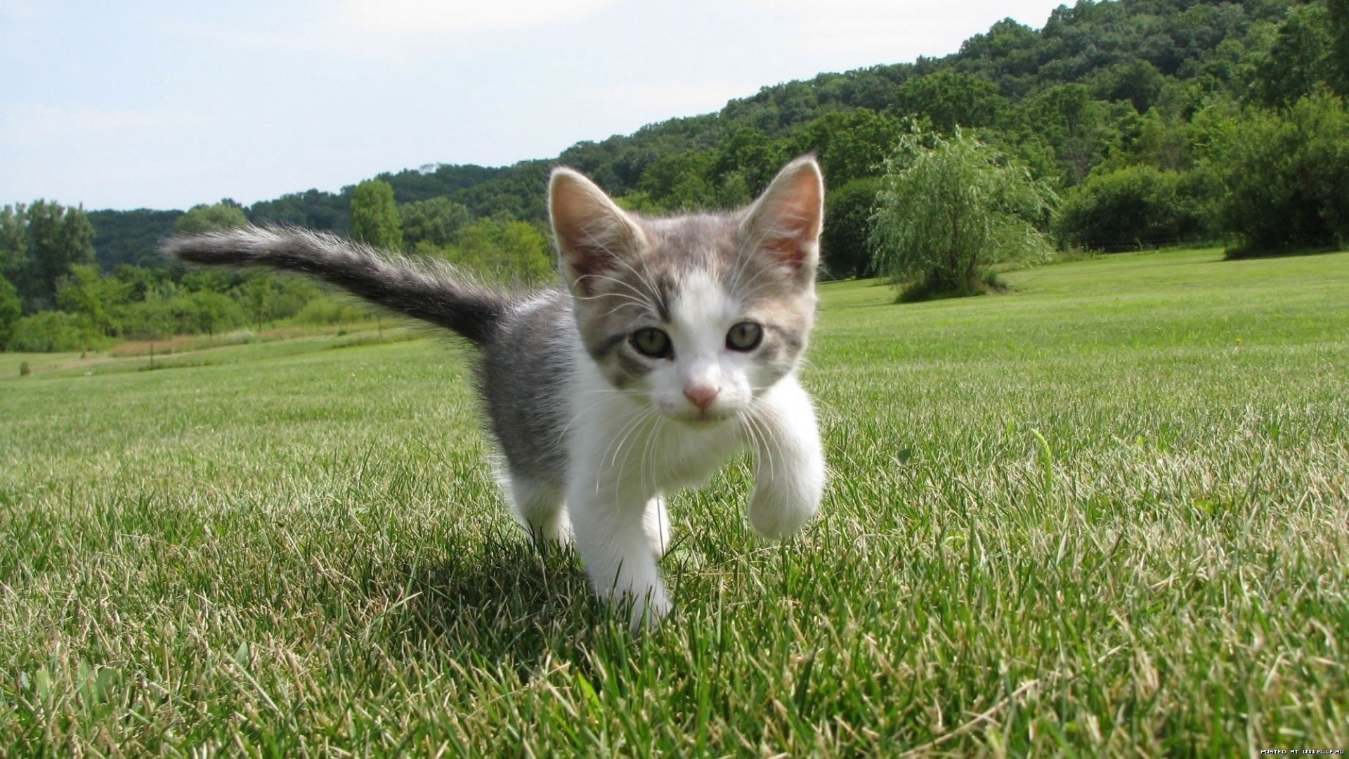 nature-cats_00255269