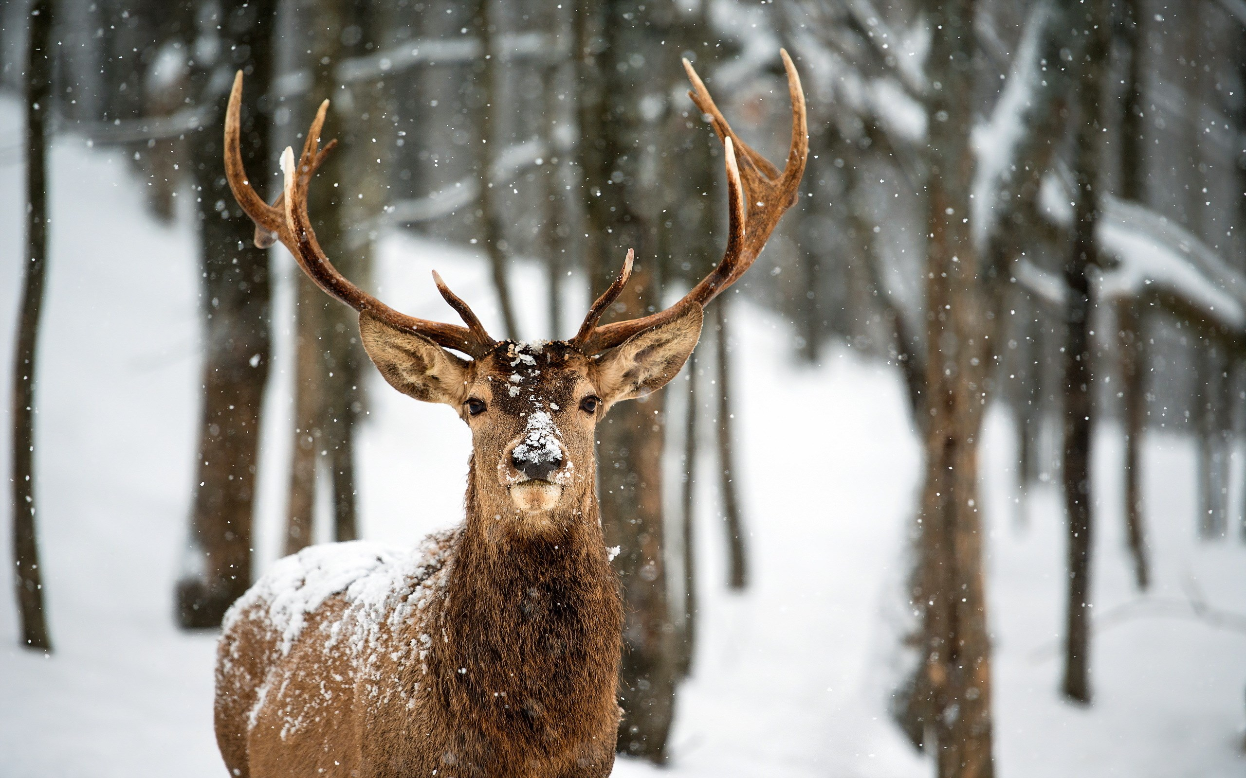7009413-deer-snow-winter-forest