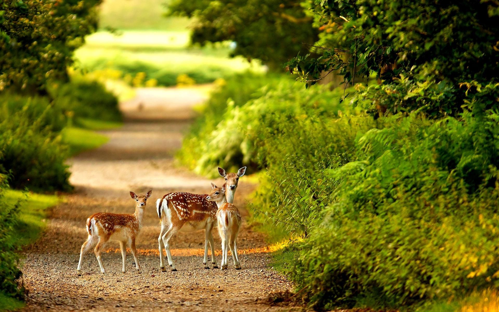 Deer-in-forest-wall-poster-photography