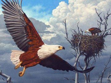 արծիվն ու կաղնին